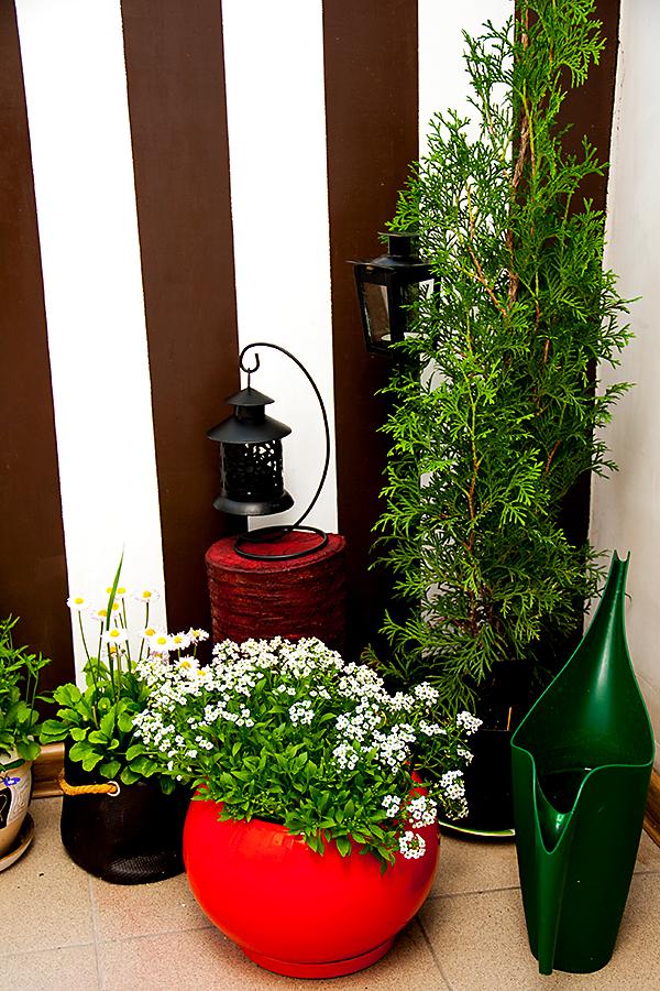 Сад на балконі. Літня версія для релаксу