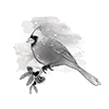 Spellbinders Cardinal 3D Shading Cling Stamp