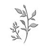 Spellbinders Die D-lites Plants Etched Dies