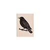 Hero Arts Rubber Stamp Starling on Branch