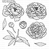 Picket Fence Studios Peony Bouquet Stamps